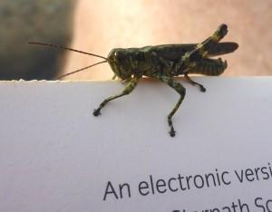 6-Grasshopper
